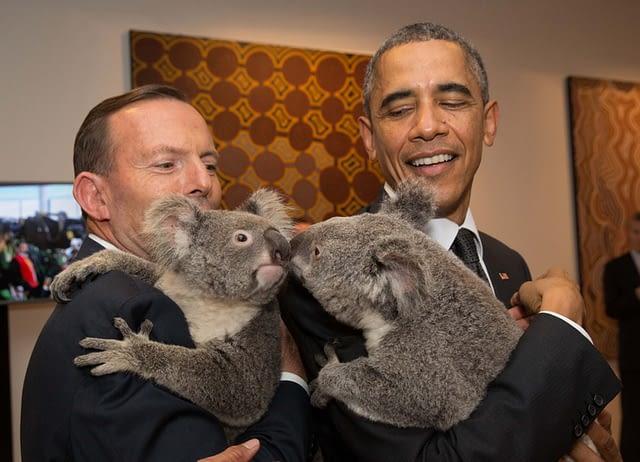 obama koala
